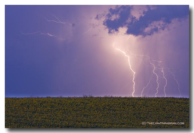 Lightning Sunflower field