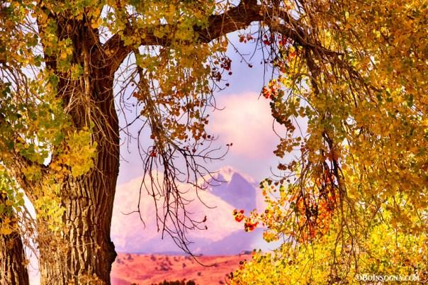 Autumn Cottonwood Twin Peaks View