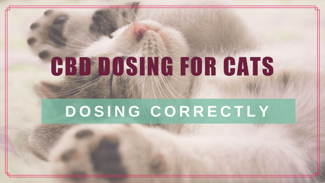 CBD Dosing for Cats: Choosing & Calculating the Right Dose