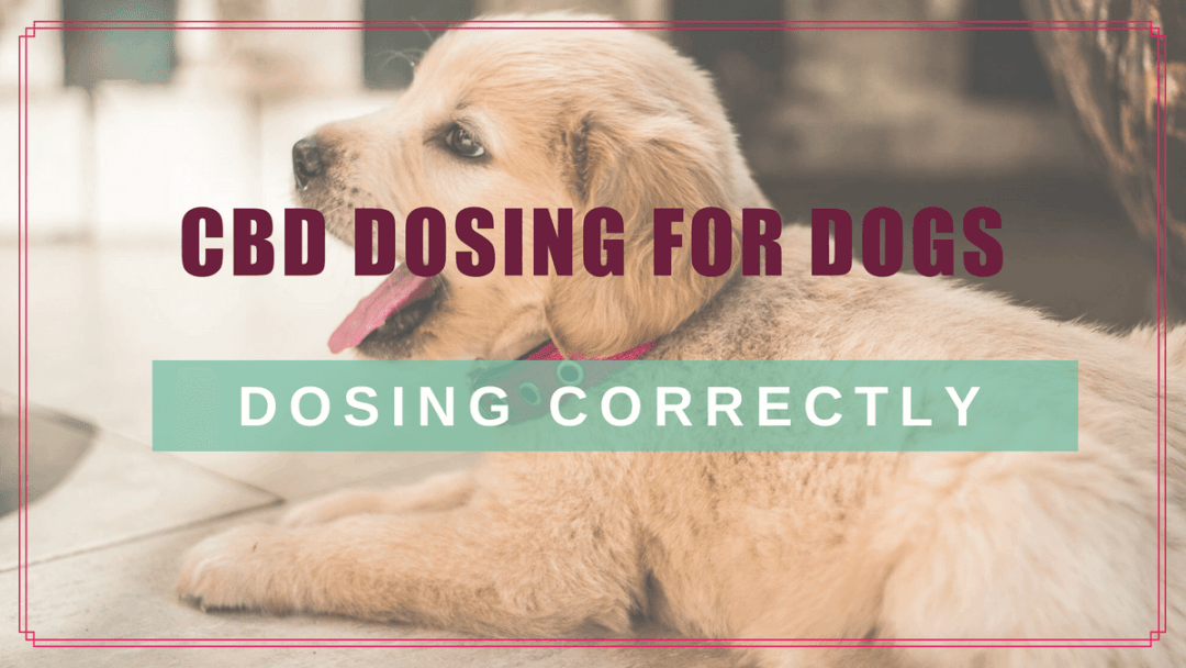 CBD Dosing for Dogs: Choosing & Calculating the Right Dose