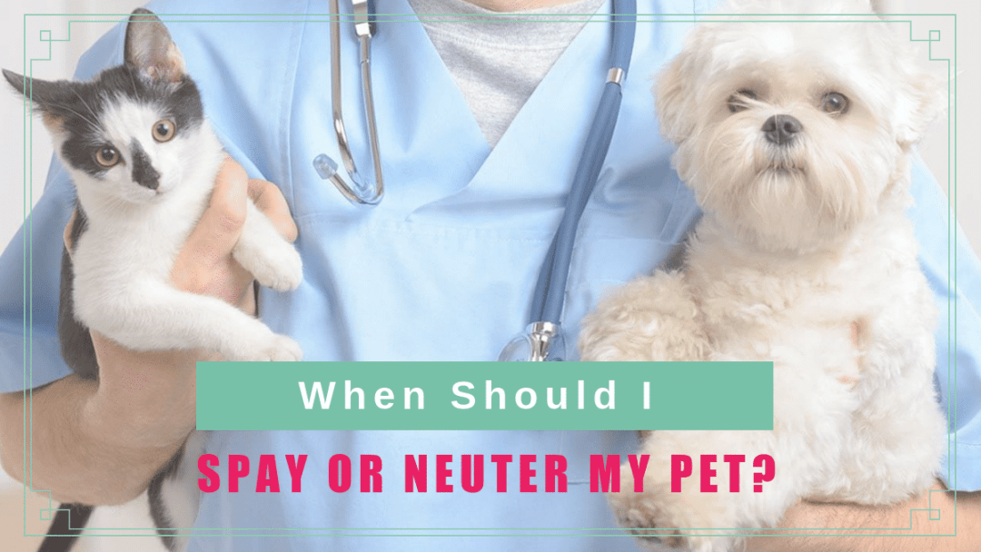 When Should I Spay or Neuter My Pet?