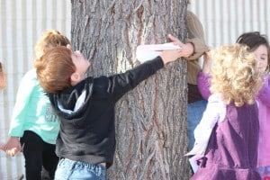 JCC Preschool class hugs trees in preparation for Tu B'svhat.