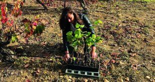 Wine On The Vine Launches Grapevine Planting Initiative For Rosh Hashanah