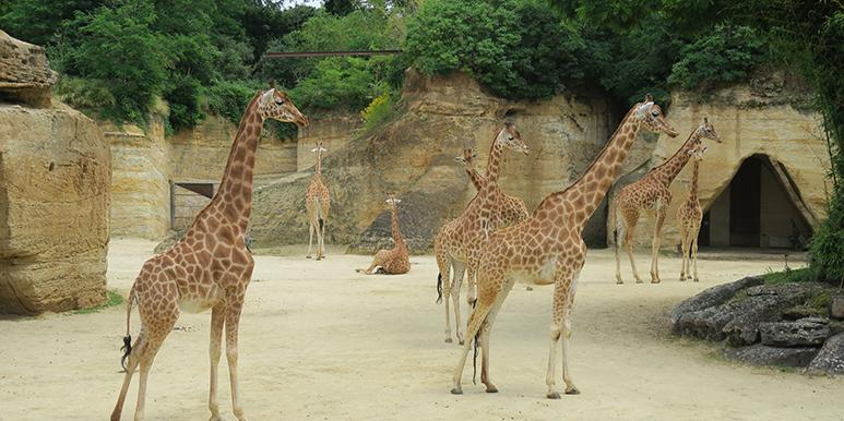 Soigneur d'un jour Zoo Doué la Fontaine