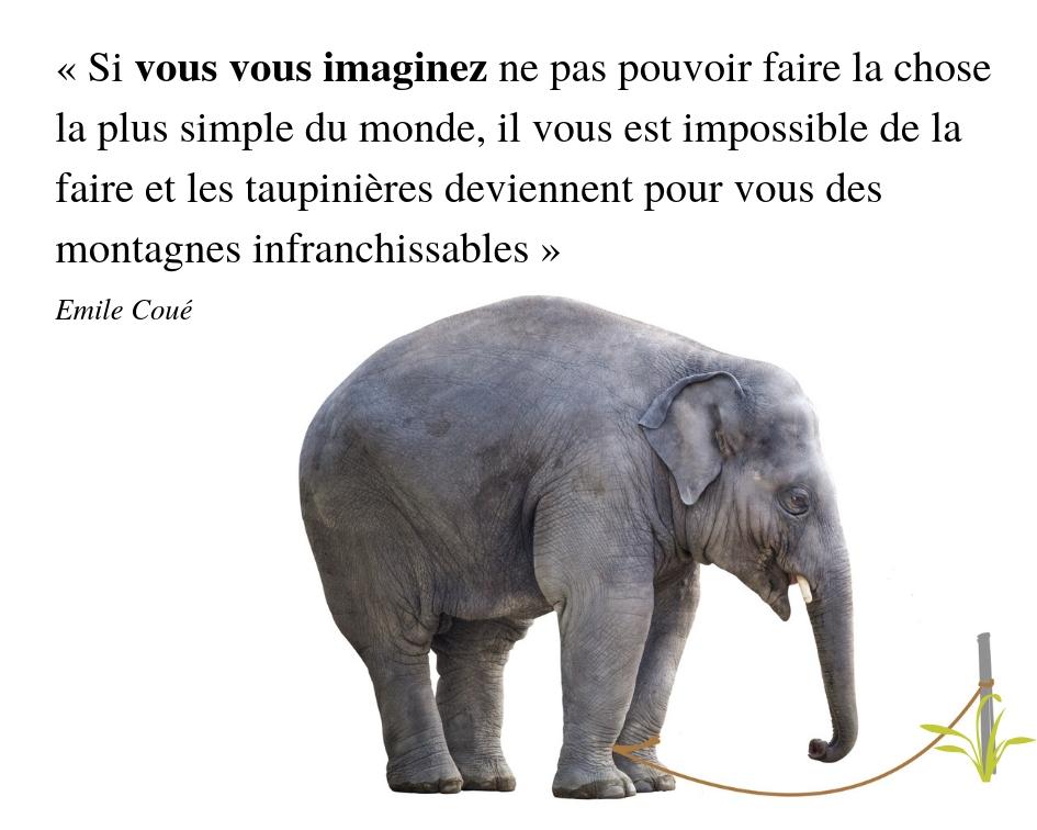 impuissance apprise elephant