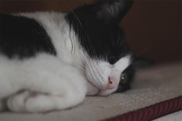 Iris, the one eyed-cat 2016