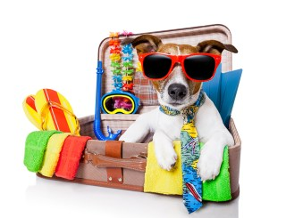 Travelling with Pets