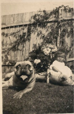 About 1920 my mother's friend, the Rawnsleys in Hay, had this ugly pooch.