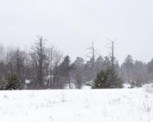 laatste bomen 001