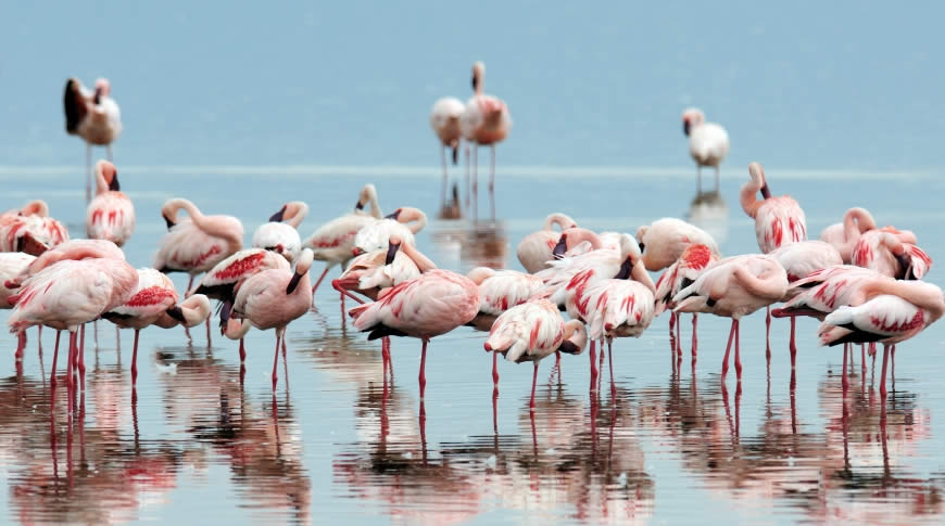 2 Days Lake Nakuru Weekend Getaway Bountiful Safaris