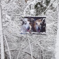 Dog banner winter