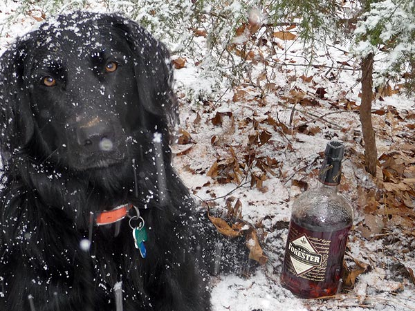 maggie and old forester