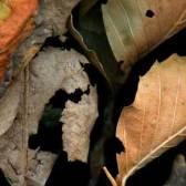 Leaves after Gericault