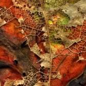 Leaves after Kandinsky