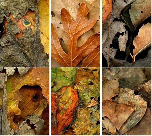 Leaf Banner Images