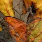 Leaves after Moran