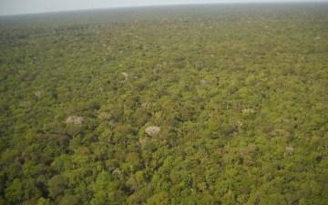 【森林破壊】アマゾンの森林火災・伐採がひどすぎ!ブラジル大統領の対応と有名人の反応