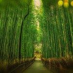【地球温暖化】京都議定書とは?日本の目標・結果は?問題点は何だったのか