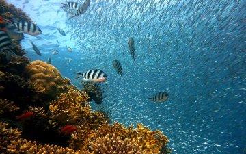 【地球温暖化】2100年までにサンゴ礁は全滅!ニュージーランドではムール貝が海でゆであがる?
