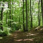 Forêt avec un bout de chou