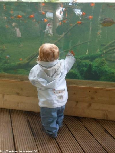 Bébé 1 an au zoo