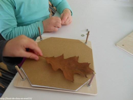 Activité d'automne : collection de feuilles