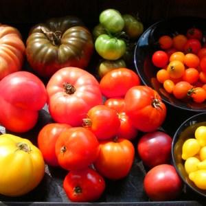 LaPauseLocale_tomates variétés diverses