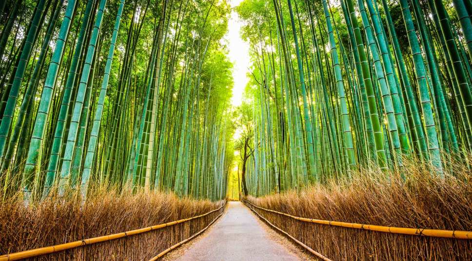 Arashiyama's bamboo forest in Kyoto, Japan
