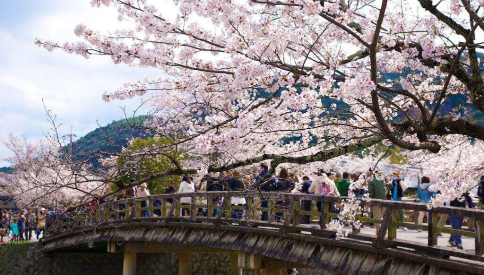 Spring cherry blossoms (sakura) at Togetsukyo Bridge, Arashiyama, Kyoto, Japan