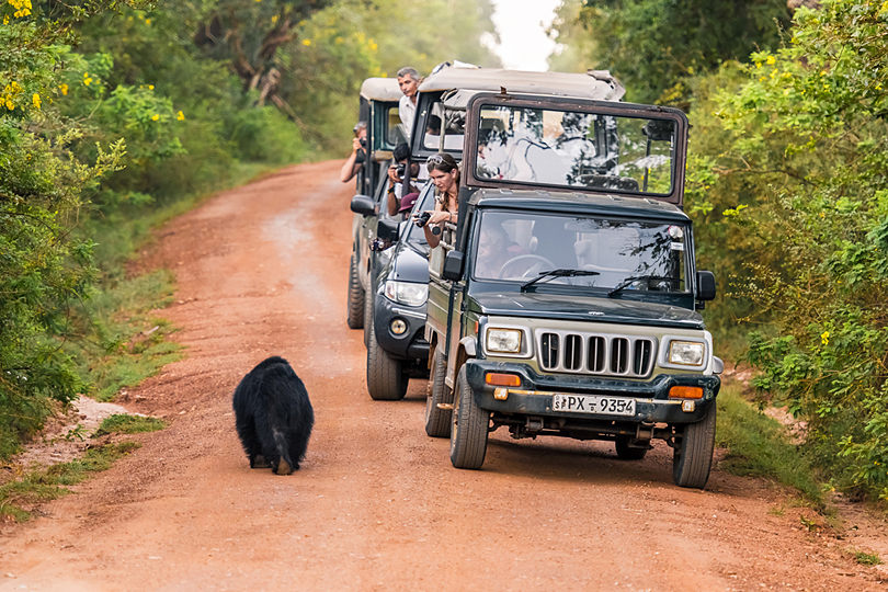 Safari Holidays in Sri Lanka