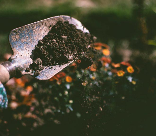 4 Tips voor tuinonderhoud!