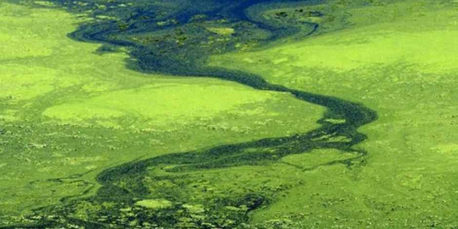 algen zuiveren verontreinigd water