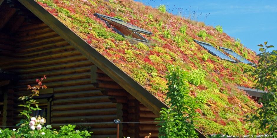 Publicatie - Groenblauwe daken en stedelijk waterbeheer