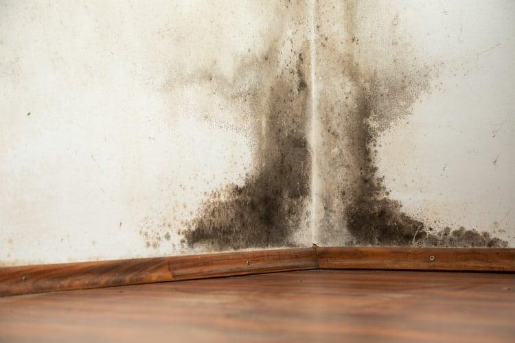 Schimmel Muur Verwijderen : Schimmel in huis verwijderen oplossingen methodes prijs mijn