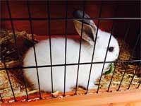 konijnenhok maken