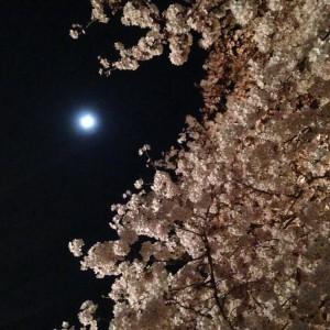 月と桜。 引き立て合って一層キレイでした♪