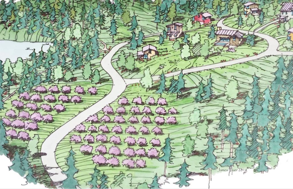 A drawing of the hillside east of the lake. A buffer of forest separates the orchard from the lake, and above the orchard a a handful of houses.