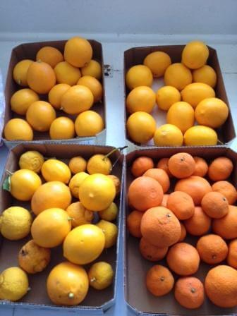 Stockpile of fruit