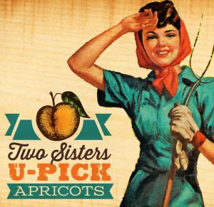 Two Sister U-Pick Apricots