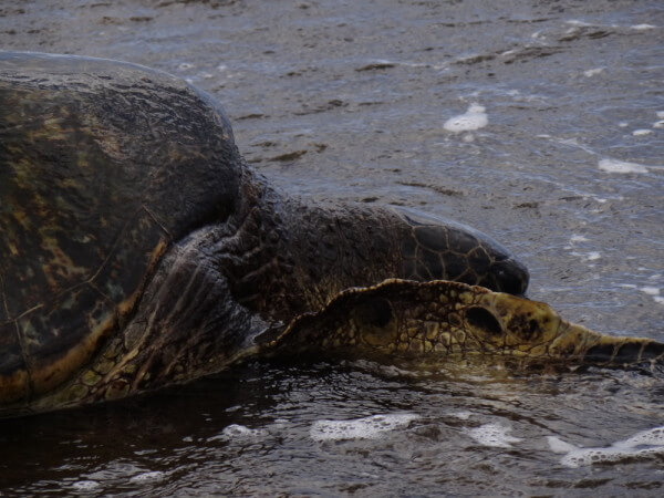 Turtle on the beach.