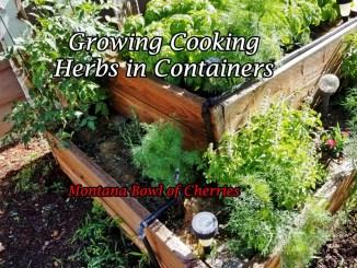 Montana Bowl of Cherries-cooking herbs growing in a box garden