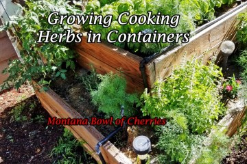 Montana Bowl of Cherries-cooking herbs growing in a box garden