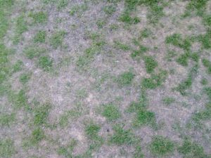 Cure Localised Dry Patch in Bowls Greens