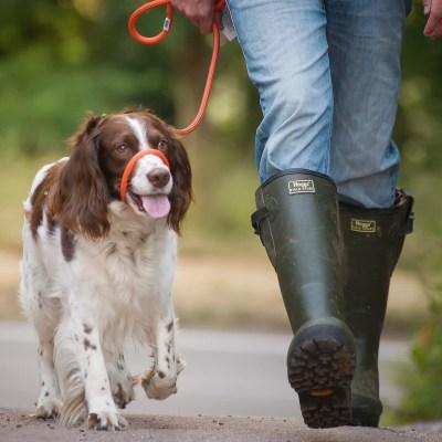 Have a boisterous Dog?  Handy Halter