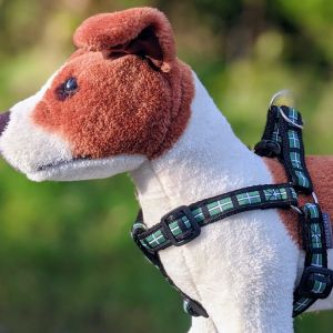 doggy chic devon flag harness