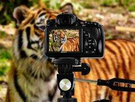 best camera for hunting