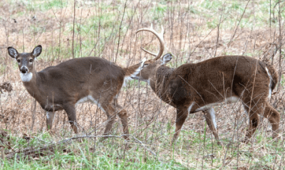 deer hunting scent control tips