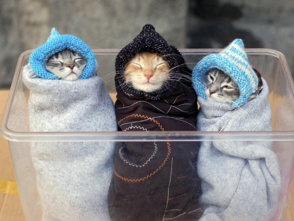 Kittens All Wrapped Up