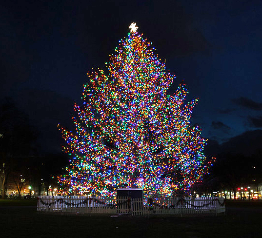 Where Does Christmas Trees Come From: Christmas Spirit Comes To New Haven Green