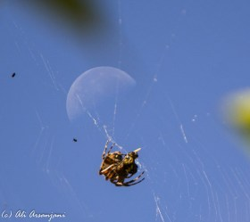 moon-and-bug2-5